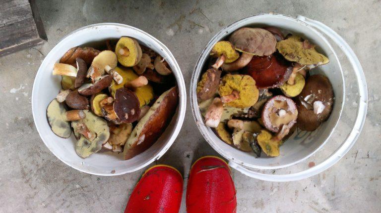 wartość odżywcza grzybów