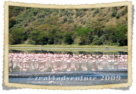 flamingoes-2