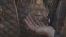 Dontos le regala el collar a Sansa como sortija familiar