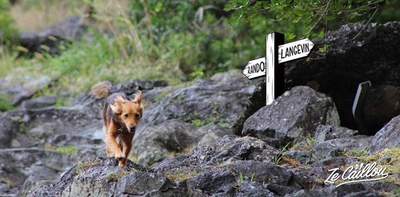 Partir en randonnée ou camping avec son chien à la Réunion par Ze Caillou