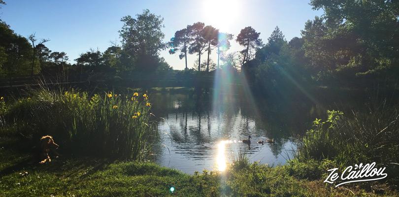 Faire de la pêche dans un lac à mimizan, proche du jardin fleuri