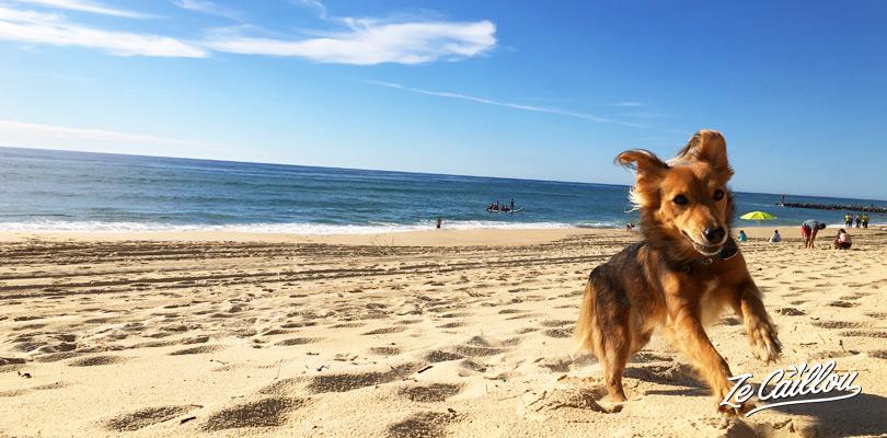 Jouer avec un chien sur les plages des Landes dans le Sud de la France Ze Caillou