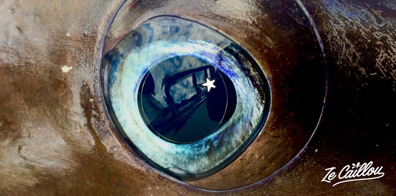 The eye of the marlin Ze Caillou caught during its deep-sea fishing day in La Reunion.