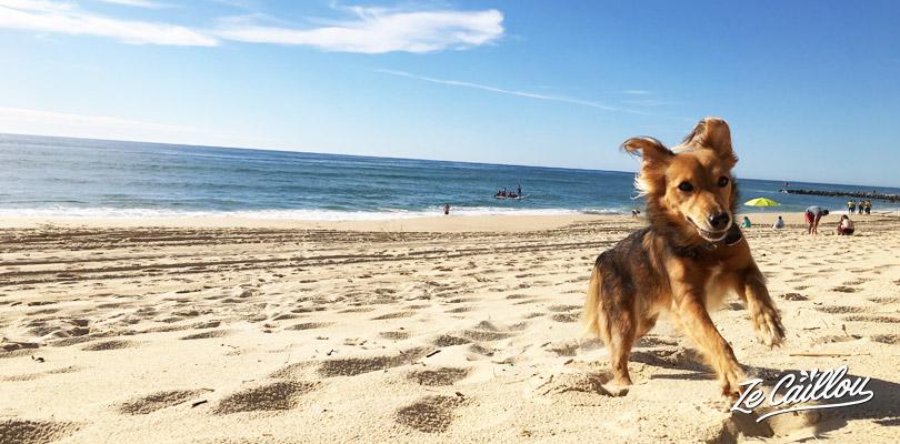 Faites faire de l'exercice à votre chien avant de prendre l'avion avec votre animal de compagnie.