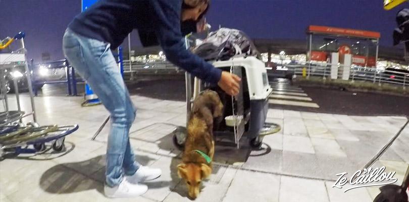 Voyager en avion avec un animal de compagnie n'est pas de tout repos, tout sur notre blog de voyage.