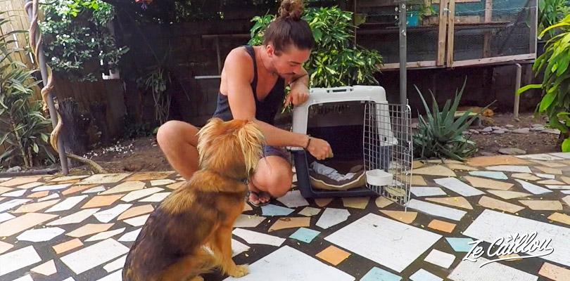 Bien choisir sa cage de transport pour prendre l'avion avec votre animal de compagnie.