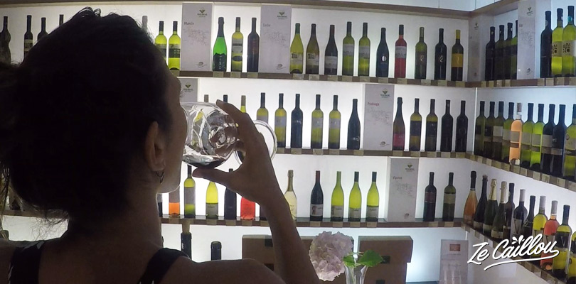 Taste slovenian wines from vipava valley during your holidays in Slovenia.