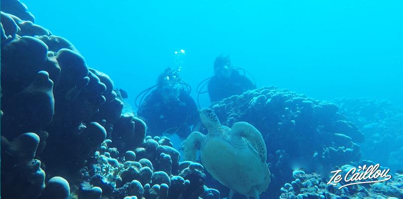Passer le niveau 1 de plongée à La Réunion et s'émerveiller devant la faune marine réunionnaise.