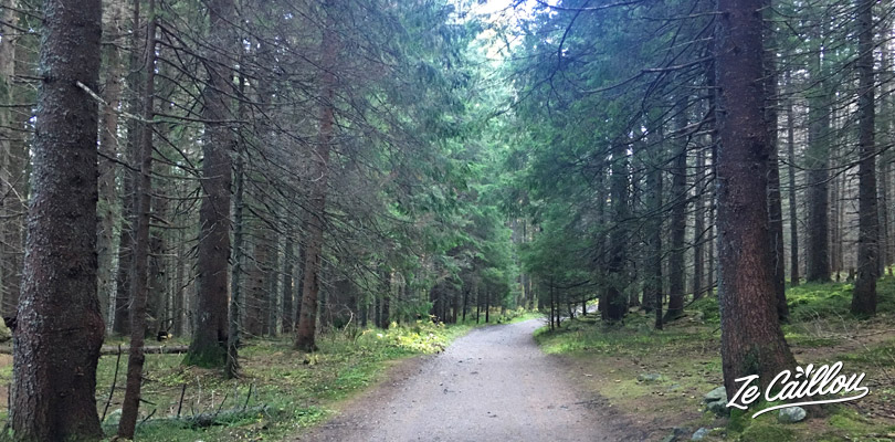 Path in the wood during our trek in the high tatras moutains range.