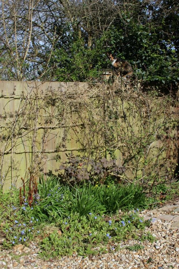 Sat on the fence again