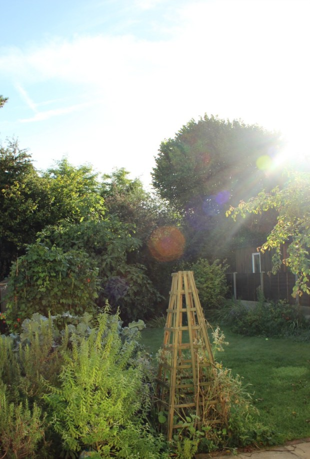 crappy-garden