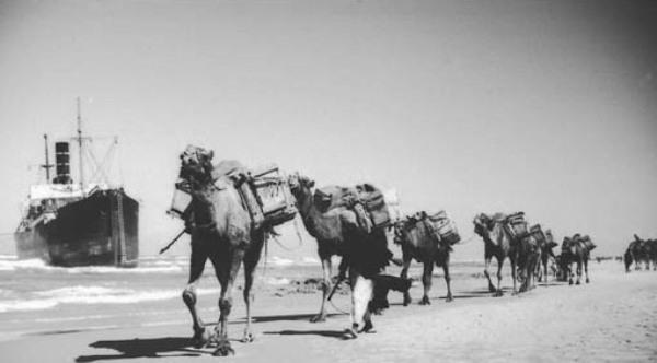 סור להעביר גמלים או חמורים ברחובות בלי שיהיו קשורים אחד לשני