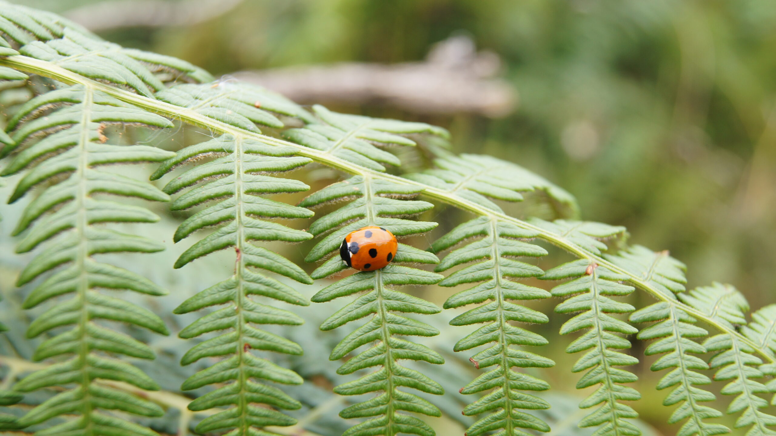 Photo of a ladybird in Kew Gardens. © 2021 Timothy Langer