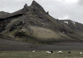 Schafe Hochland Vulkan