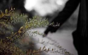 Herbstspaziergang - Die letzten Momente