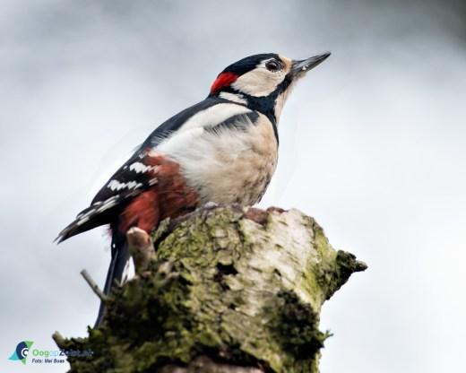 Oefenmateriaal voor nationale tuinvogeltelling