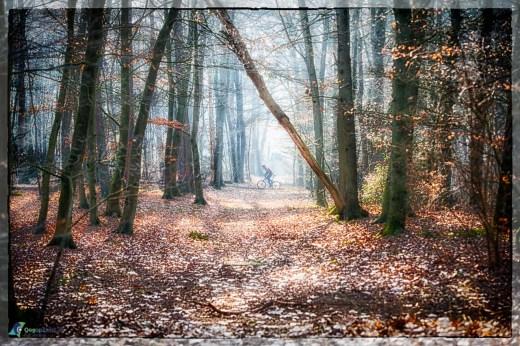 Austerlitz, mountainbiken, staatsbosbeheer, Winter, Winterzon