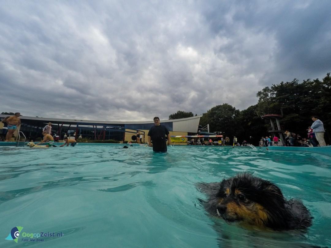 Hondenplons in Zwembad Dijnselburg