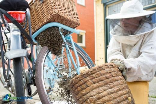 """Een bijenvolk bestaande uit ong. 10.000 bijen hebben donderdag een fiets gekraakt op de Steynlaan in Zeist. 's Ochtends hadden de bijen na een kleine zwerfvlucht gekozen om te nestelen onder een rietenmand van een fiets. Een imker (Sonne Copijn 06-22584818) uit Groenekan heeft het bijenvolk """"gevangen"""" door de koningin in een korf te krijgen. De bijen reageerde boos en menig toeschouwer wrd geprikt. De imker gaf aan dat het een uniek plek is voor zo'n grote groep bijen. Over het algemeen zoeken zij bomen op om zo te nestelen."""