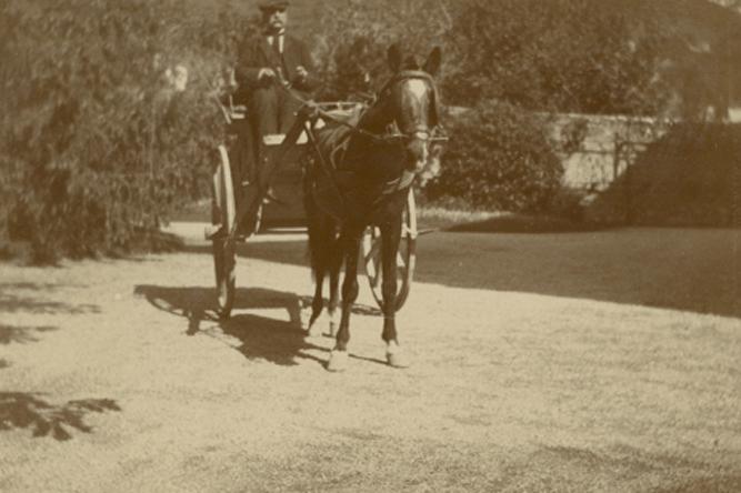 Der Kutscher der Familie Wenner, Antonio Cosimato, in Fratte di Salerno, ca. 1916