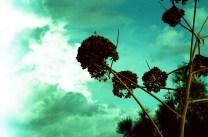 Film7605_16kl
