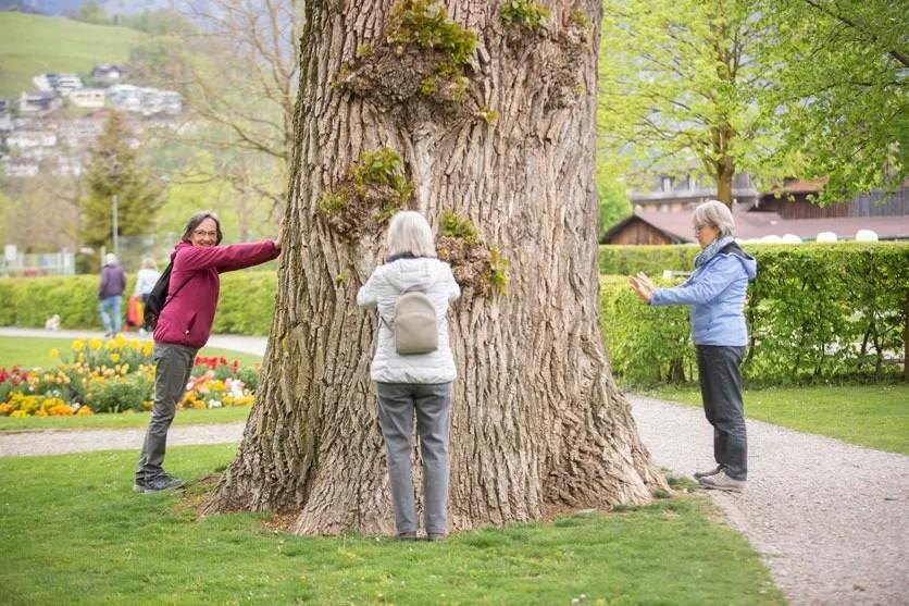 Drei ältere Damen stemmen ihre Arme an einen Baumstamm.