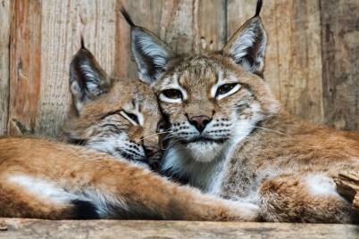 Mama Mia mit einem Kleinen