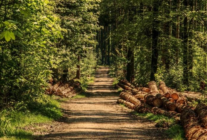 Härteres Vorgehen gegen illegalen Holzeinschlag gefordert