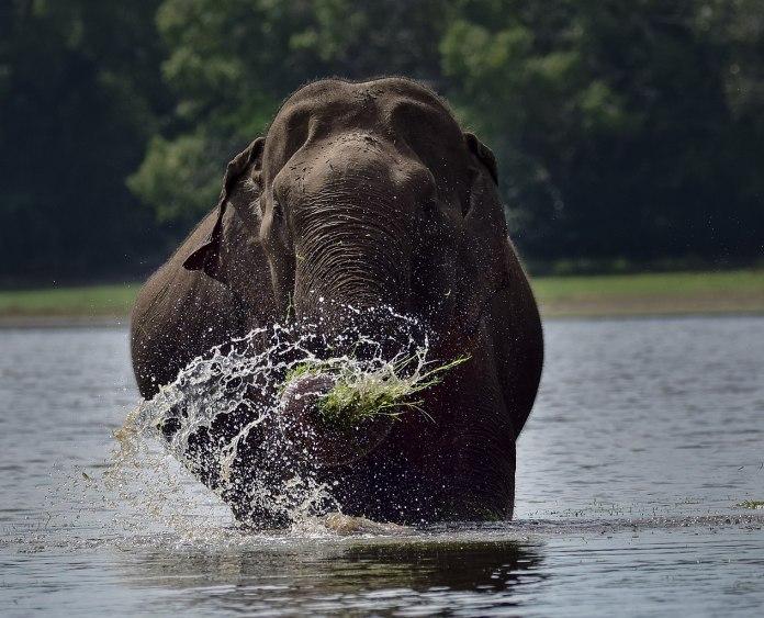 0,0 Promille beim Elefantenreiten in SriLanka