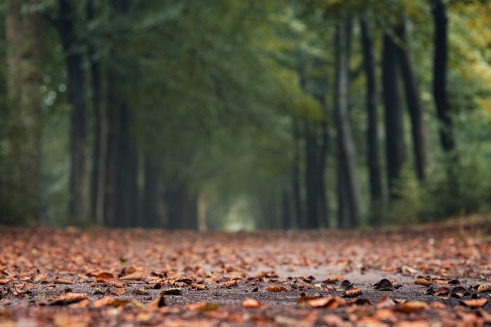 Salzburg: Vermisste Frau tot in Wald gefunden