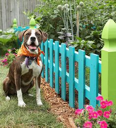 use of dog fences