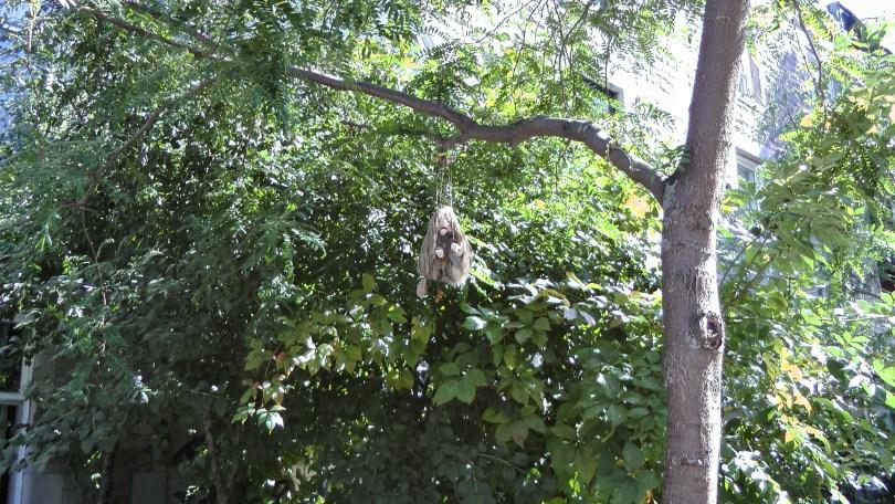 In a tree on de l'Esplanade near Fairmont