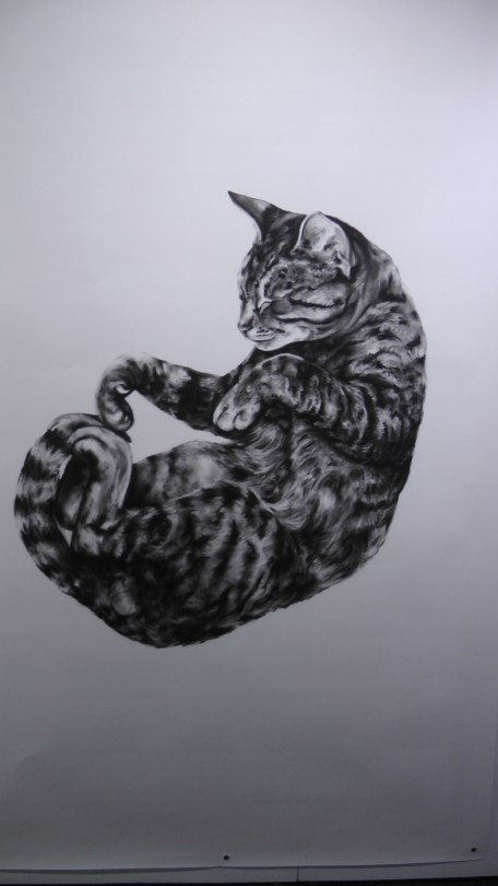 """Kate Puxley: Animals in the City: Gatto Italiano #4, Charcoal on Paper, approx 85"""" x 52"""""""