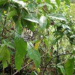 バタフライガーデンの蝶
