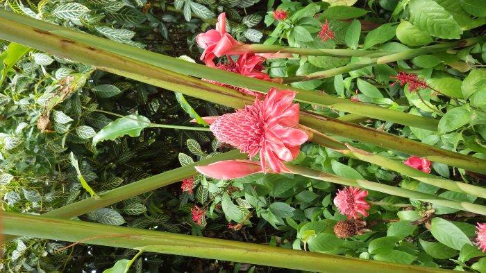 バタフライガーデンにあった綺麗な花