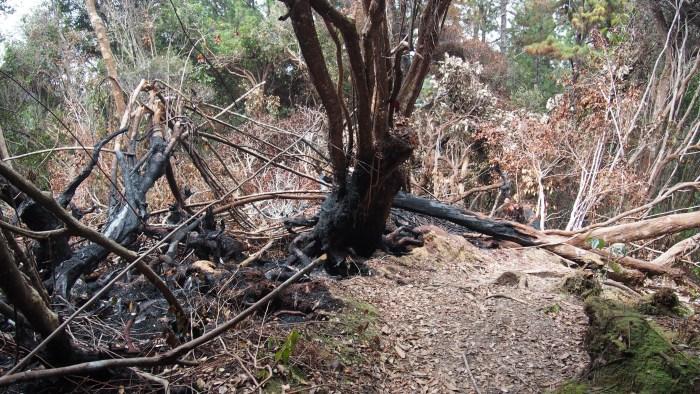枯れてしまった木