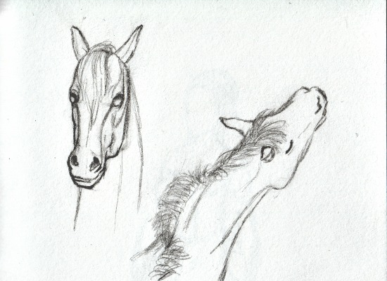 art studies pinterest horse thumbnail