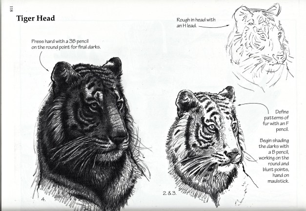 art-of-pencil-franks-tiger-tutorial