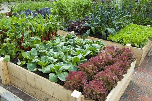Високі грядки утримують вологу і є, по суті, компостними ямами, які гарантують гарний врожай