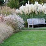"""Декоративні трави і злаки – топ-10 """"Зеленої Садиби"""""""