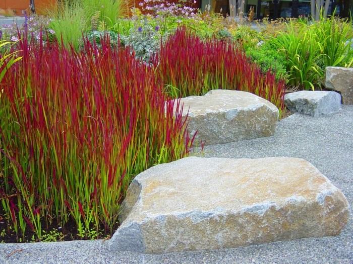 декоративні трави імперата циліндрична