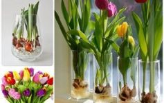 тюльпани в склянці фото