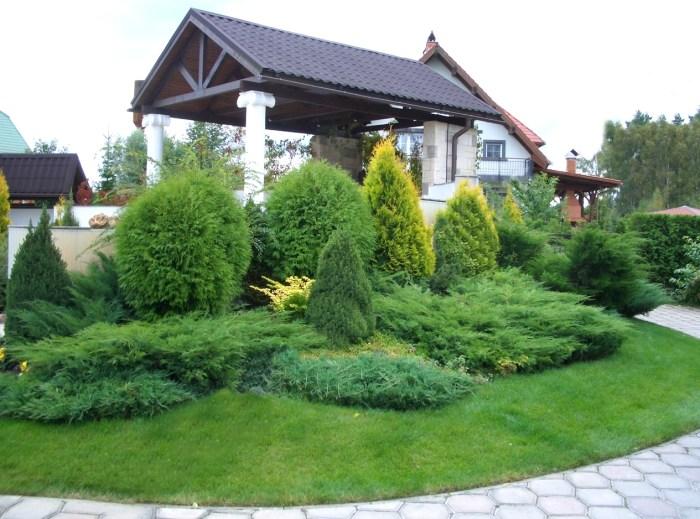 хвойні рослини озеленення