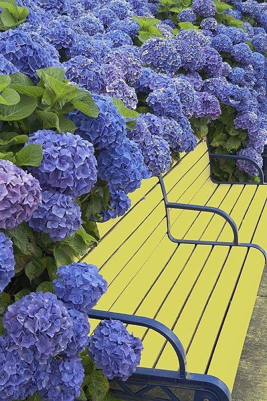 Розумно поєднуємо кольори в саду
