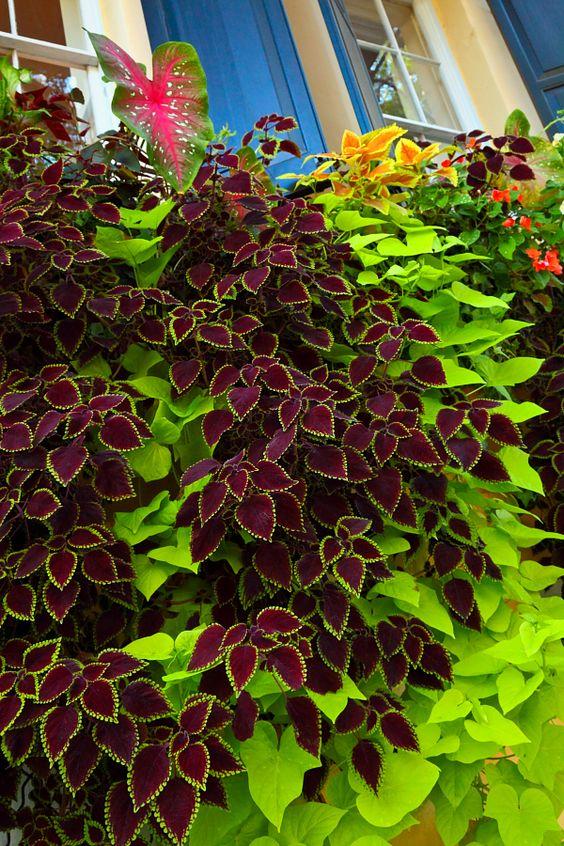 Підберіть квіти, декоративні кущі та дерева з різним забарвленням листя