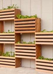 вертикальне озеленення зображення 32