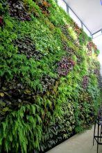 вертикальне озеленення зображення 52