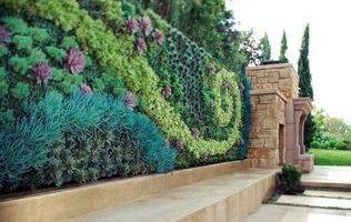 вертикальне озеленення картинка