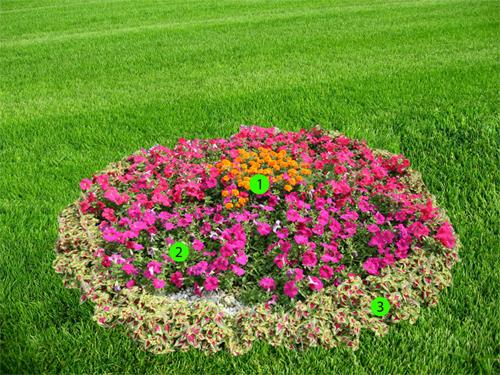 квітник зображення 1