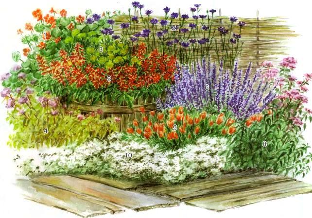 квітник зображення 16